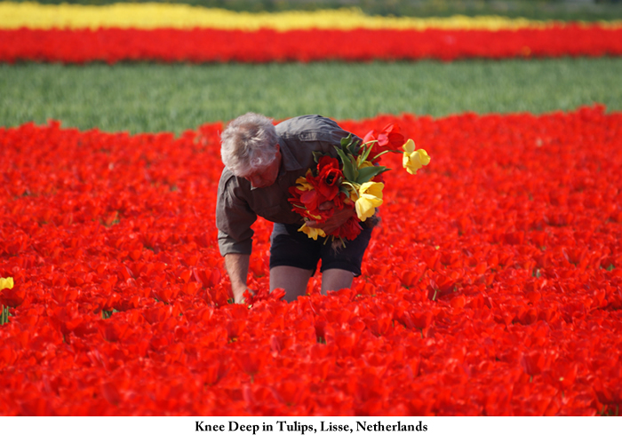 knee-deep_in_tulips2