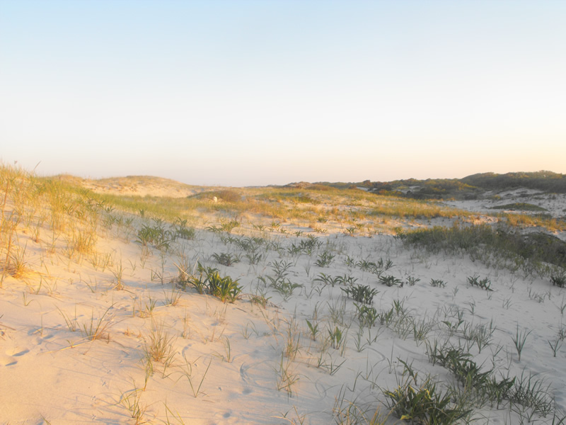 Sand Dunes at Island Beach State Park